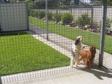Secure Kennels with their own grass play area