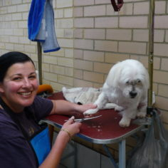 Kerry grooms small dogs at Delsasse for Dogs